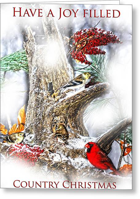 Evergreen With Snow Greeting Cards - Winter Birds Christmas Card Greeting Card by Randall Branham