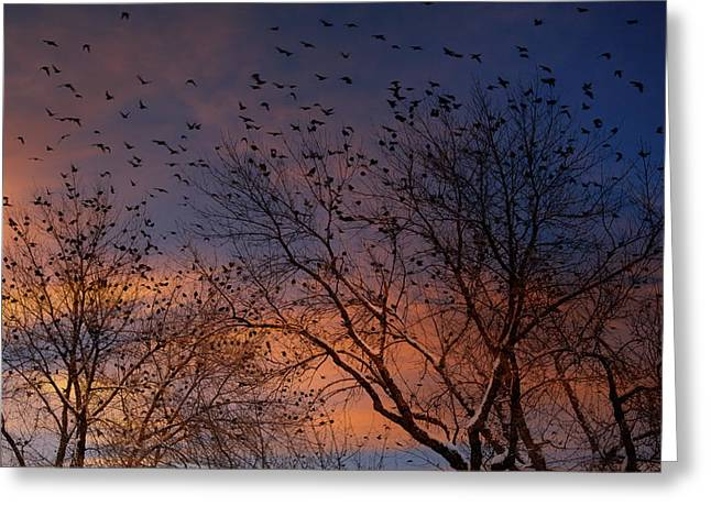 Snowy Evening Greeting Cards - Winter Birds Greeting Card by Utah Images