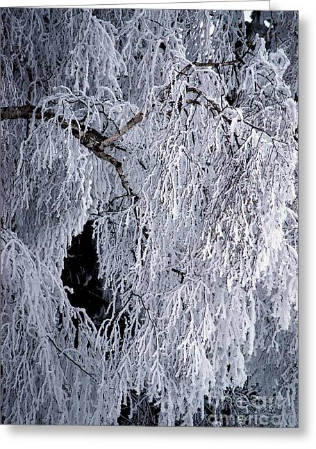 Winter Blanket Greeting Card by Sharon Elliott