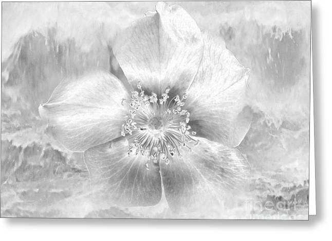 Glass Wall Drawings Greeting Cards - Winter Blossom Greeting Card by TLynn Brentnall