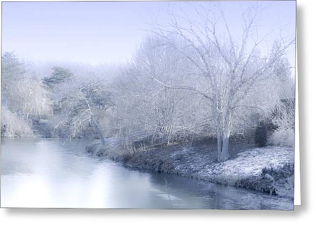 Botanic Digital Greeting Cards - Winter Blue and White Greeting Card by Julie Palencia