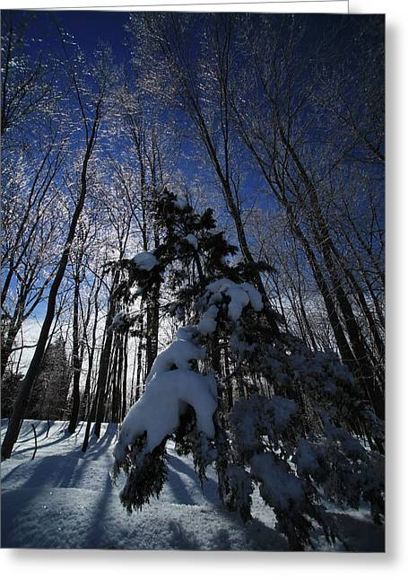 New England Snow Scene Greeting Cards - Winter Blue Greeting Card by Karol  Livote