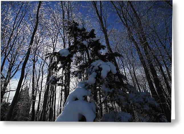Winter Blue Greeting Card by Karol  Livote