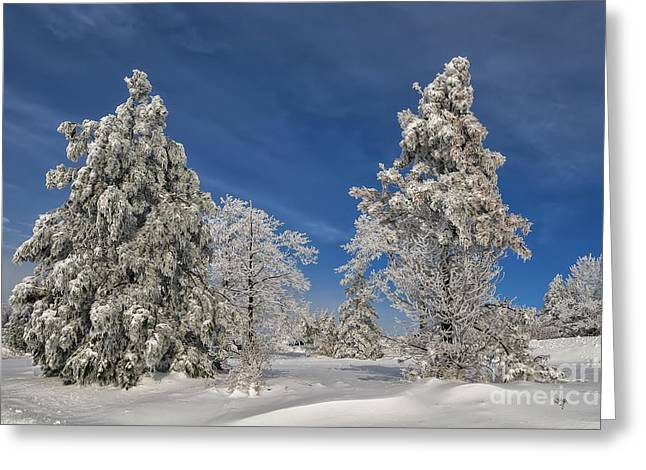 Winter Blues Greeting Card by Lois Bryan