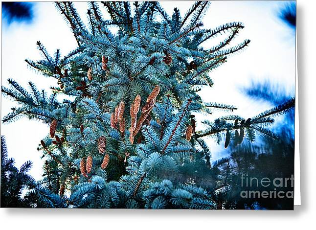 Aperture Greeting Cards - Winter Bouquet Greeting Card by Janna Kern