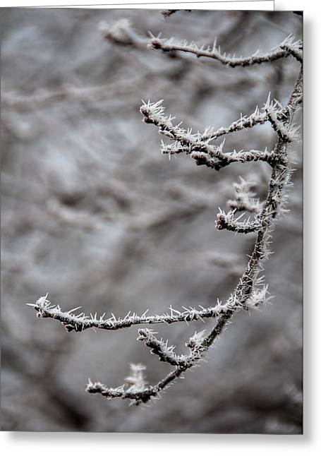 Muted Pyrography Greeting Cards - Winter Branch Greeting Card by Mary Katherine Powers