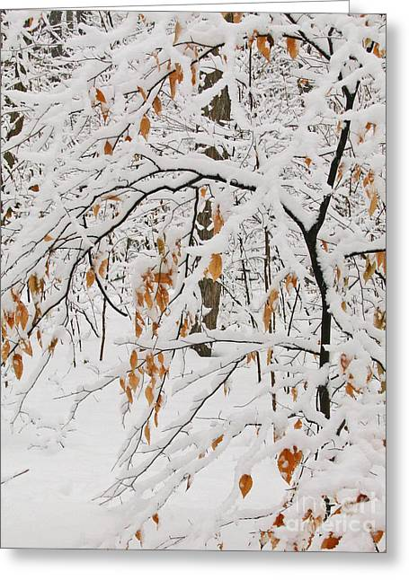 Ann Horn Greeting Cards - Winter Branches Greeting Card by Ann Horn