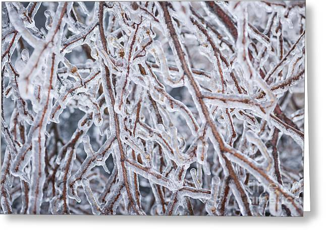 Winter Storm Greeting Cards - Winter branches in ice Greeting Card by Elena Elisseeva