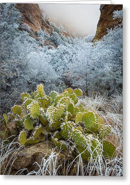 Big Basin Greeting Cards - Winter Cacti Greeting Card by Inge Johnsson