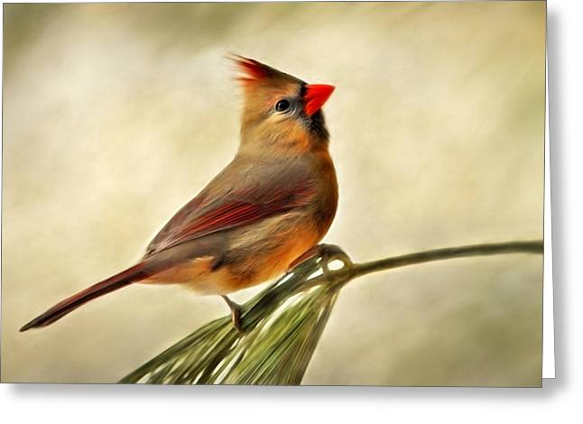 Nature Scene Paintings Greeting Cards - Winter Cardinal Greeting Card by Christina Rollo