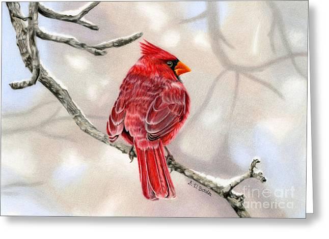 Colored Pencil Drawings Greeting Cards - Winter Cardinal Greeting Card by Sarah Batalka