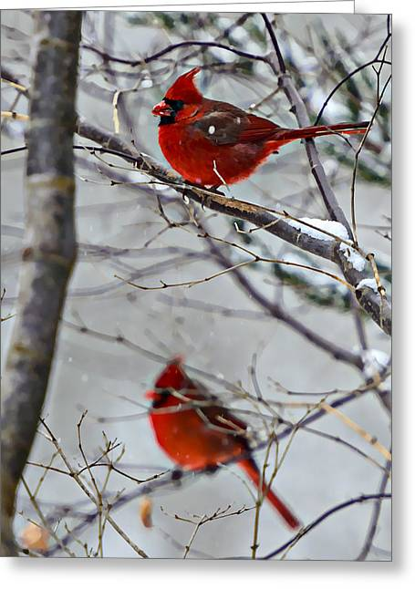 Winter Cardinals Greeting Card by Susan Leggett