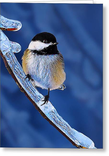 Winter Digital Photo Scene Greeting Cards - Winter Chickadee Hangs On Greeting Card by Bill Caldwell -        ABeautifulSky Photography