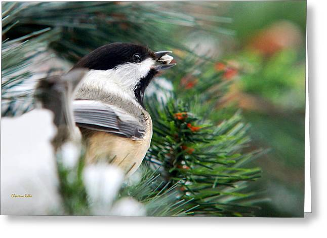 Chickadee Greeting Cards - Winter Chickadee With Seed Greeting Card by Christina Rollo