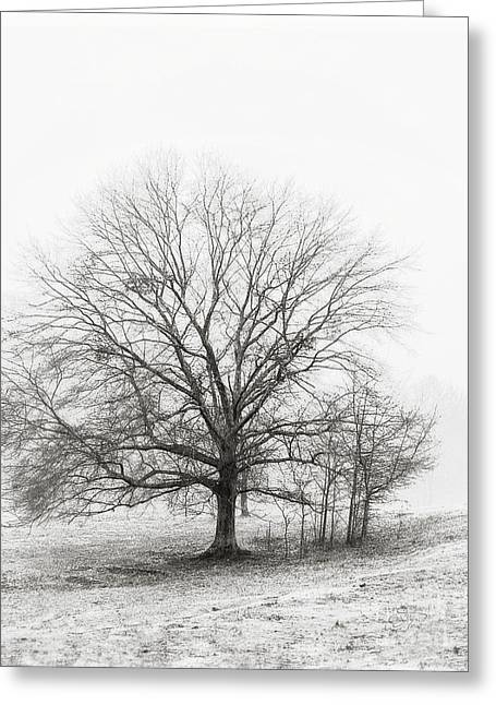 Cris Hayes Greeting Cards - Winter Chrome Greeting Card by Cris Hayes