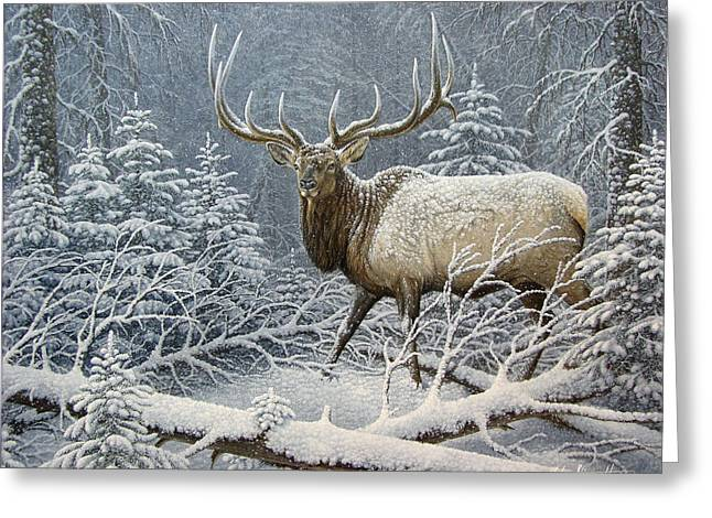Fir Trees Greeting Cards - Winter Coat Greeting Card by Mike Stinnett