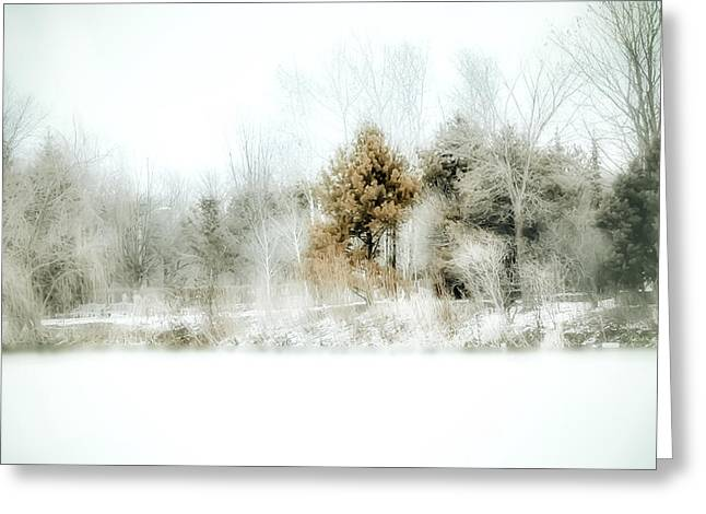 Snow Tree Prints Greeting Cards - Winter Colors Greeting Card by Julie Palencia