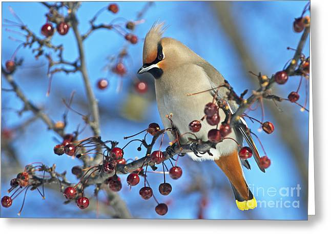 Festblues Greeting Cards - Winter Colors.. Greeting Card by Nina Stavlund