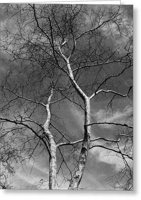 Gnarly Greeting Cards - Winter Comes Greeting Card by Richard Stephen