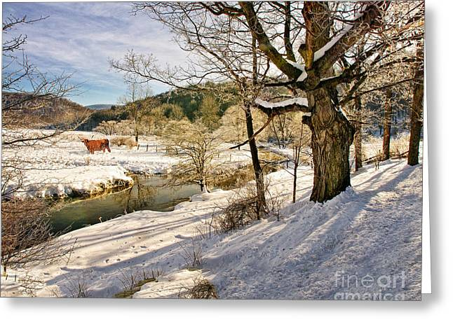 Bedford Hills Greeting Cards - Winter Creek Steer Greeting Card by Timothy Flanigan
