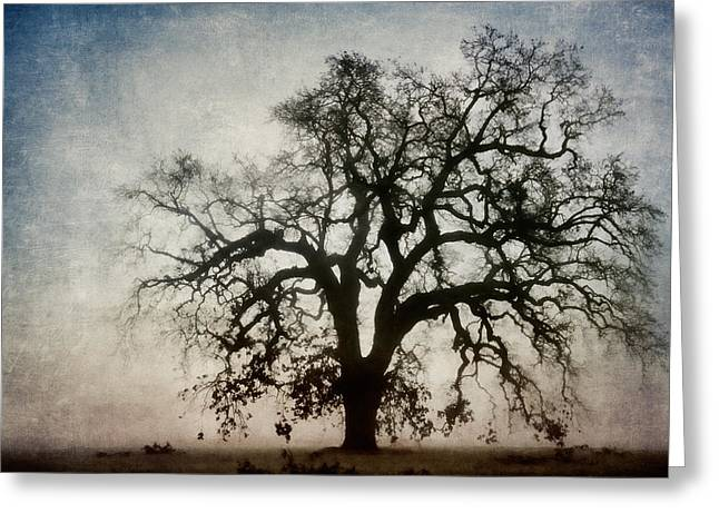 Strength Greeting Cards - Winter Dawn Tree Silhouette Greeting Card by Carol Leigh