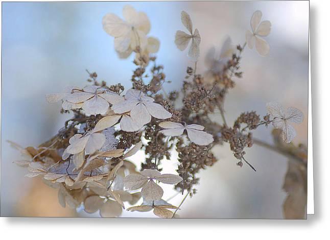 Gladiolas Greeting Cards - Winter Decay 2 Greeting Card by Fraida Gutovich
