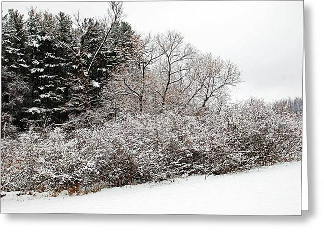 Winter Delight Greeting Card by Aimee L Maher Photography and Art Visit ALMGallerydotcom