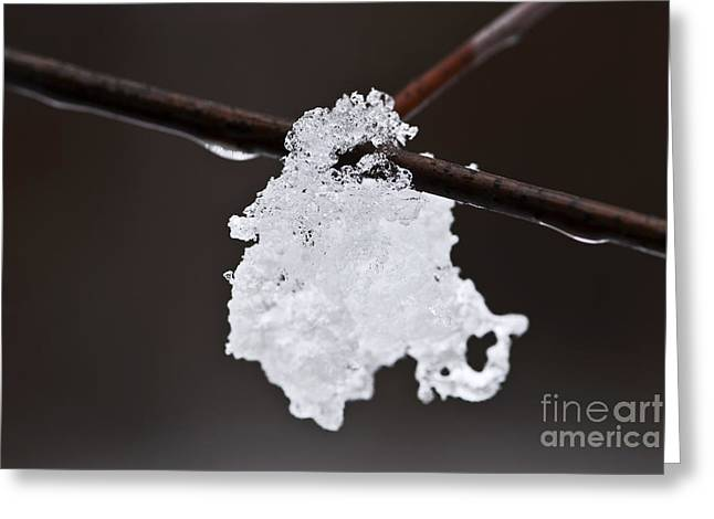Snowy Tree Greeting Cards - Winter detail Greeting Card by Elena Elisseeva