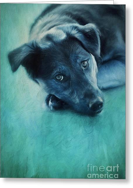 Beloved Greeting Cards - Winter Dog Greeting Card by Priska Wettstein