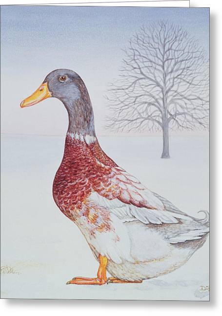 Mallard Paintings Greeting Cards - Winter Drake Greeting Card by Ditz