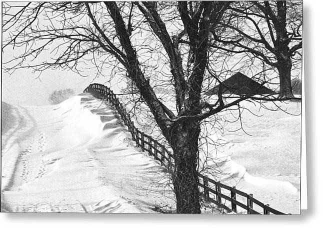 Winter Driveway Greeting Card by Wendell Thompson