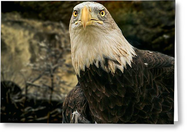 Winter Eagle Greeting Card by Bob Orsillo