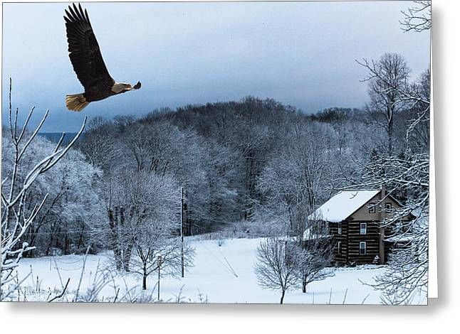 Jahred Allen Photography Greeting Cards - Winter Eagle Greeting Card by Jahred Allen