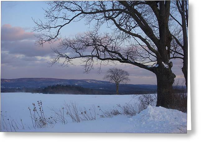 The Hills Greeting Cards - Winter Elm Tree Greeting Card by Nancy-Fay Hecker
