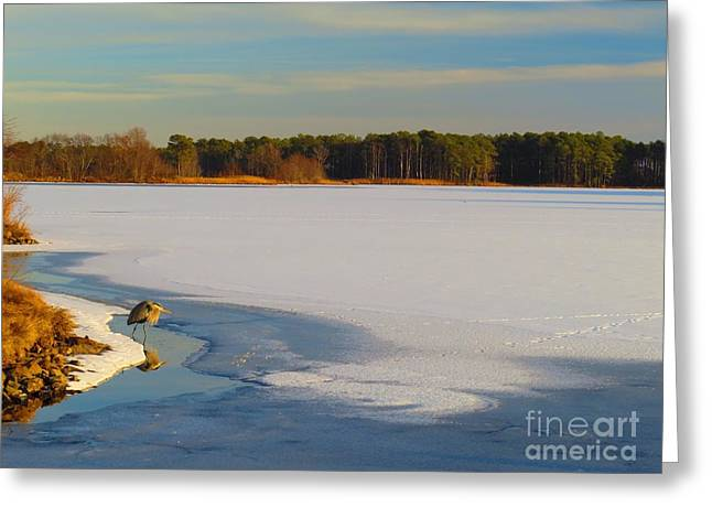 Wadingbird Greeting Cards - Winter evening at Blackwater Greeting Card by Rrrose Pix