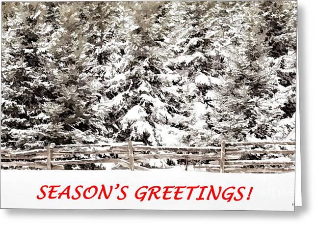Split Rail Fence Greeting Cards - Winter Evergreens Greeting Card Greeting Card by Barbara McMahon