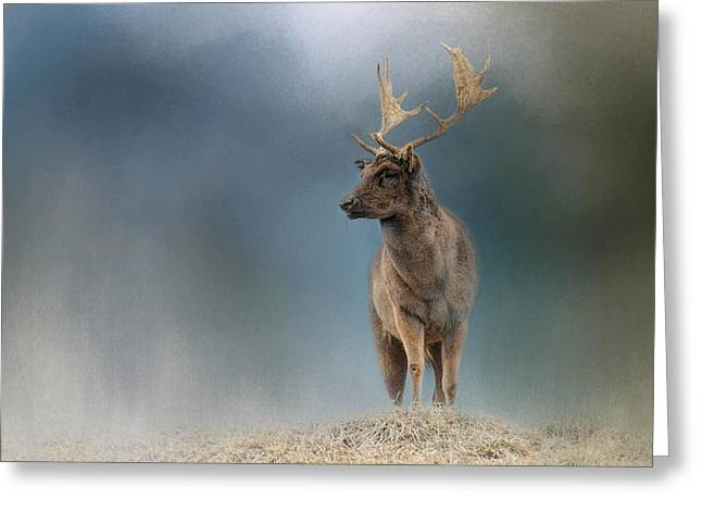 Winter Fallow Buck Greeting Card by Jai Johnson