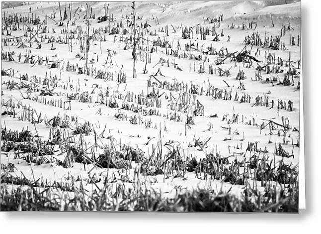 Cornfield Greeting Cards - Winter Field Greeting Card by Christi Kraft