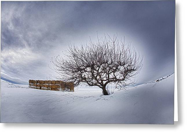 Hay Bales Greeting Cards - Winter Fields Greeting Card by Eggers   Photography