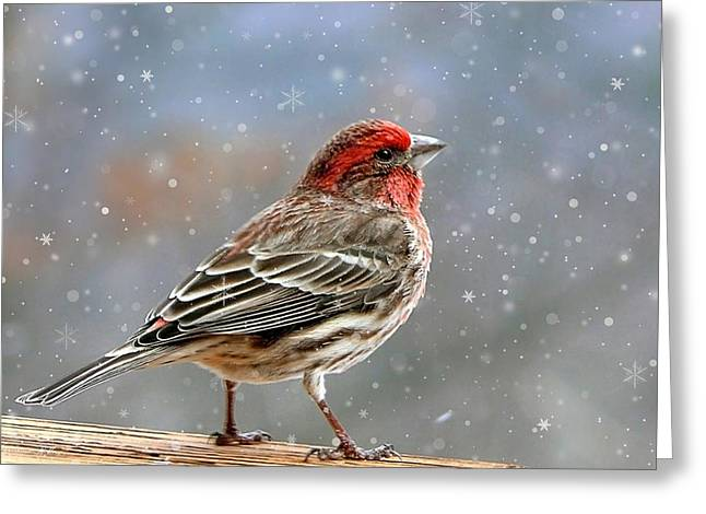Christina Digital Art Greeting Cards - Winter Finch Christmas Art Greeting Card by Christina Rollo
