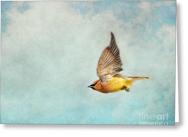 Cedar Waxwings Greeting Cards - Winter Flight Greeting Card by Jai Johnson