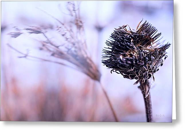 Wildflower Fine Art Greeting Cards - Winter Flowers  Greeting Card by Bob Orsillo