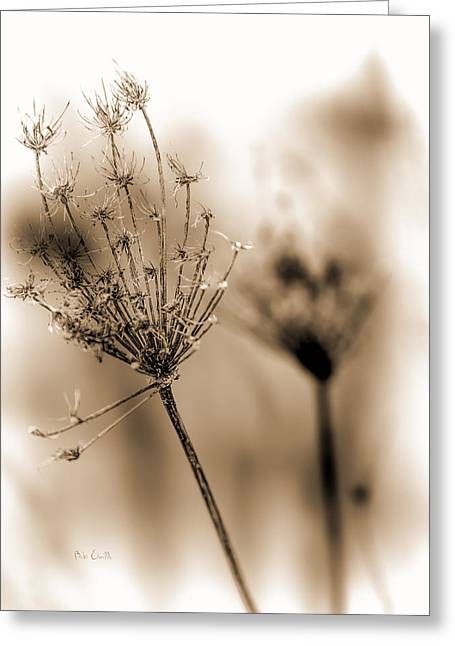 Wildflower Fine Art Greeting Cards - Winter Flowers II Greeting Card by Bob Orsillo