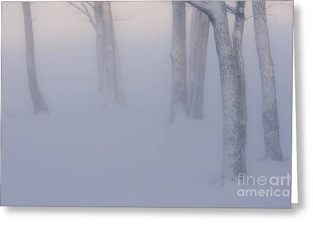 Snow Scene Landscape Greeting Cards - Winter Fog Greeting Card by John Shaw