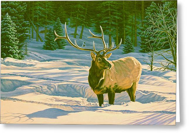 Elk Wildlife Greeting Cards - Winter Forage - Elk Greeting Card by Paul Krapf