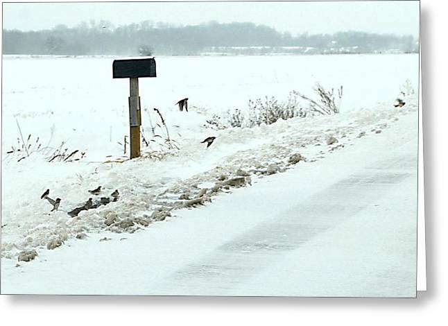 Indiana Landscapes Greeting Cards - Winter Foragers Greeting Card by Julie Dant
