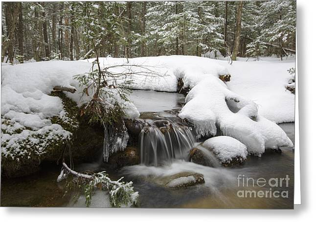 Snowy Stream Greeting Cards - Winter Forest - Lincoln New Hampshire USA Greeting Card by Erin Paul Donovan