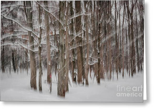 Snow Abstract Greeting Cards - Winter forest abstract II Greeting Card by Elena Elisseeva