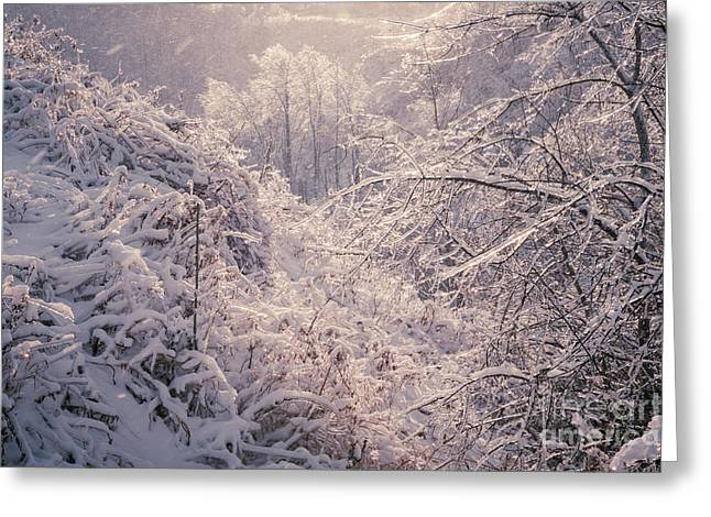 Conditions Photographs Greeting Cards - Winter forest after ice storm Greeting Card by Elena Elisseeva