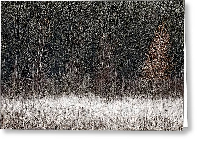 Winter Photos Greeting Cards - Winter Forest Greeting Card by Bonnie Bruno